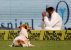 India vs England, Dog, Vizag, Twitter, Vizag Dog