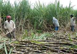 sugar mills in absence of export subsidies make distress