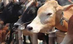 17 cattle die of starvation in Madhya Pradesh's Gwalior