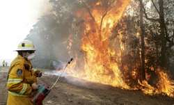 Sri Lanka donates Ceylon Tea for Australia bush fire victims