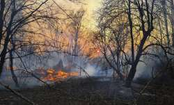 Chernobyl forest fire