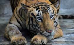 coronavirus animals, animals coronavirus positive, animals at risk, indian zoos on high alert,