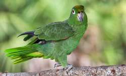 Vastu Tips: Put photo of green parrot in north direction for business growth