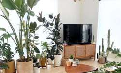 World Environment Day 2020: 5 indoor plants that will purify air in your home