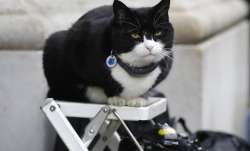 In this file photo dated Tuesday, Feb. 12, 2019, Palmerston, the Foreign Office cat sits on a photo