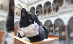 UK Foreign Office cat, Lord Palmerston, retires as mouse