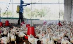 No Bird Flu detected in Delhi's poultry, all samples taken from Ghazipur market test negative