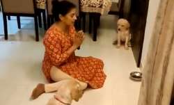 Adorable video of woman teaching pups to pray before meals will melt your heart | WATCH