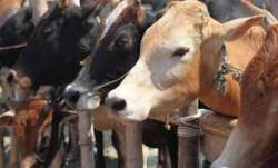 Cattle smuggling, Bangladesh, halted, south Bengal front, BSF report, Border Security Force, south B