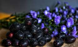 Side Effects of Jamun: These people should not consume Java Plum. Know why