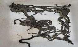 Ninety snakes, snakes found in california, Northern California, snakes found in home, latest interna